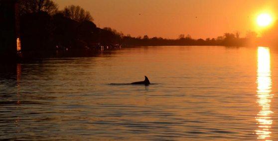 Il Delfino a Pisa